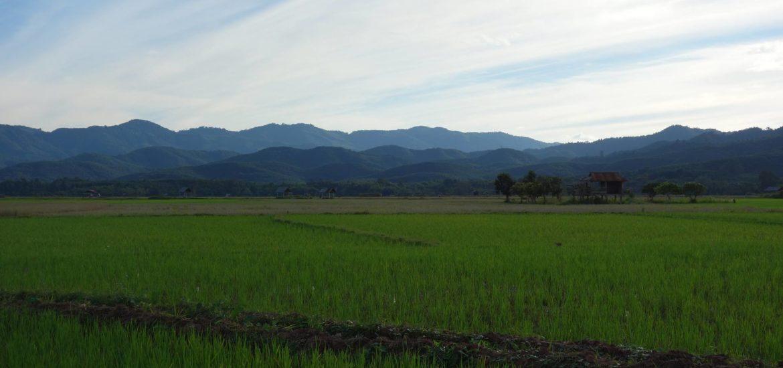 Pola ryżowe w Luang Namtha