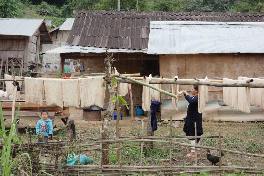 suszenie bawełny na palach wioski wokół Luang Namtha