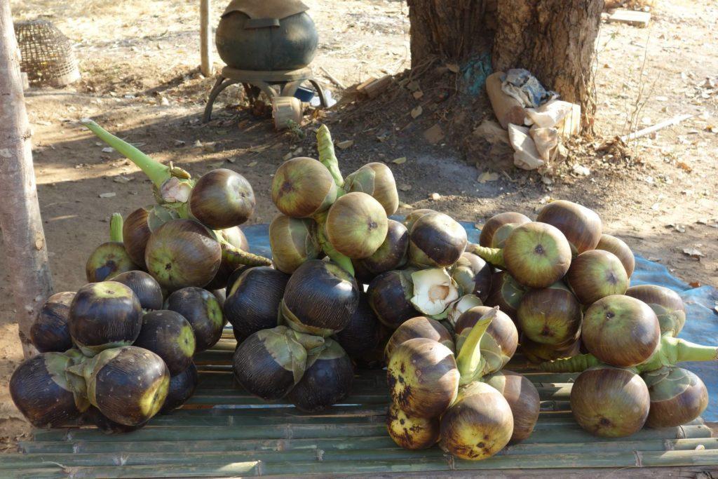 owoce palmy cukrowej